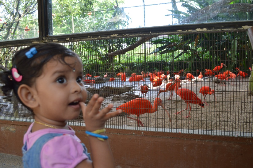 Anni birds unnayi.....
