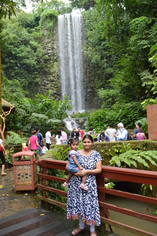 near waterfall inside bird park